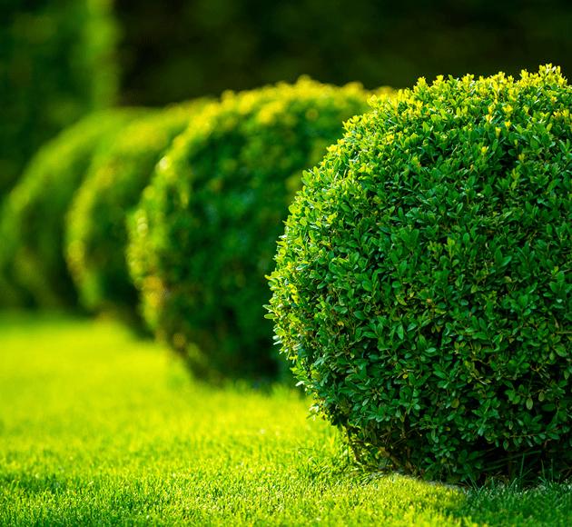 Entretien parc & jardin